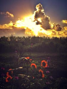 morningrays
