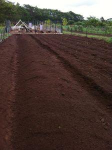 new soil